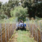 vini biologici sicilia siracusa